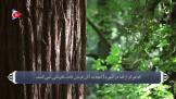 ترجمه فارسی سوره تحريم
